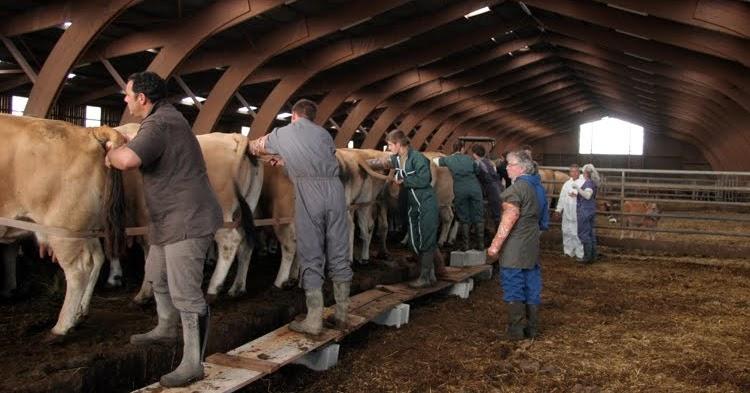 l 39 ins mination artificielle chez les bovins agriculture moderne. Black Bedroom Furniture Sets. Home Design Ideas