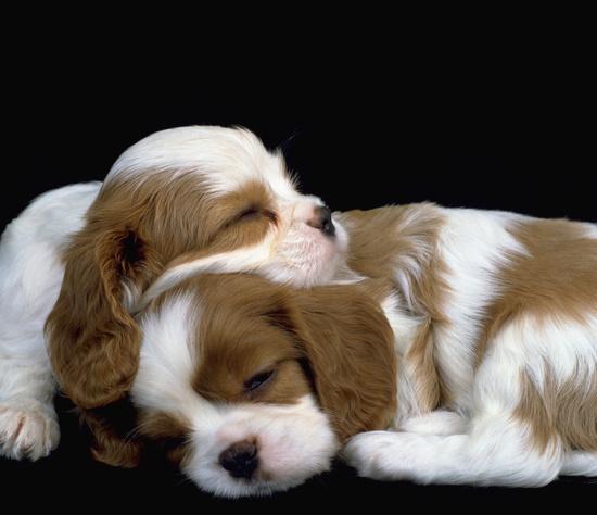 http://1.bp.blogspot.com/-pwjQ6OEKH4k/TsVsPjQQOcI/AAAAAAAAm-g/UKHdBnI9S88/s640/adorable_sleeping_puppies_15.jpg