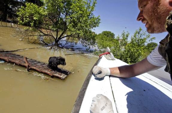 These 16 photos will disturb you... The Balkans in the grip of flood! - A man rescues a dog during heavy floods in Vojskova May 19, 2014.
