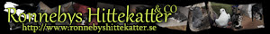 Ronnebys Hittekatter & Co