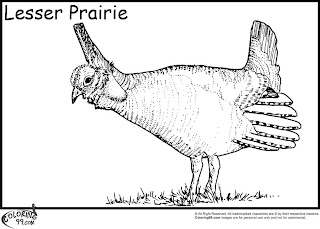 lesser prairie quails coloring pages