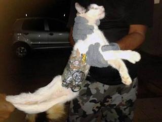 """Un chat """"passeur"""" arrêté dans une prison au Brésil"""
