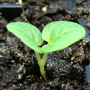 Ready, Set, GROW Gardening Seminar