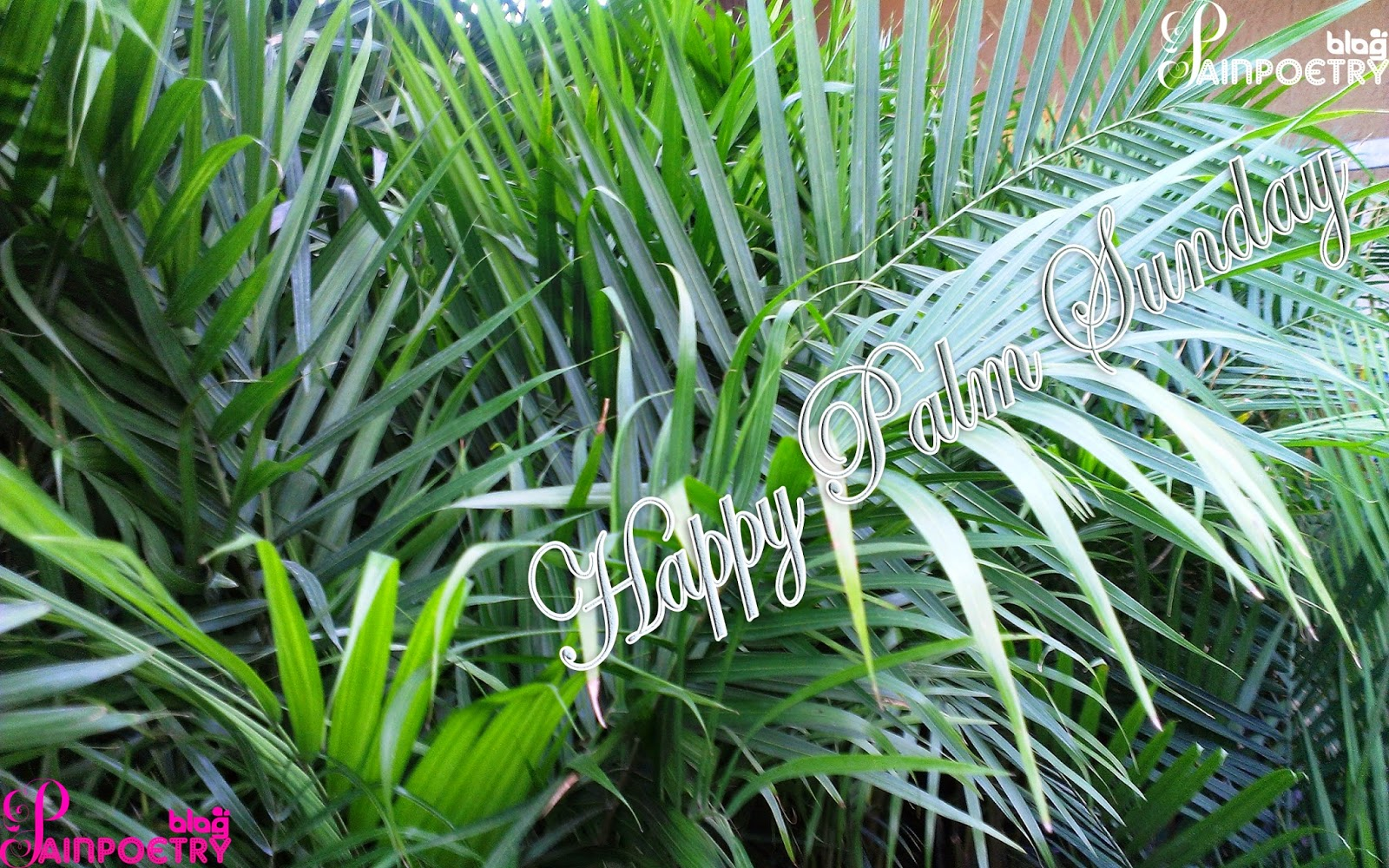 Palm-Sunday-Image-Wallpaper-Wide