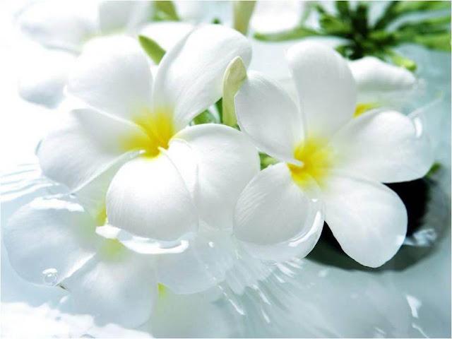 White Wonders1