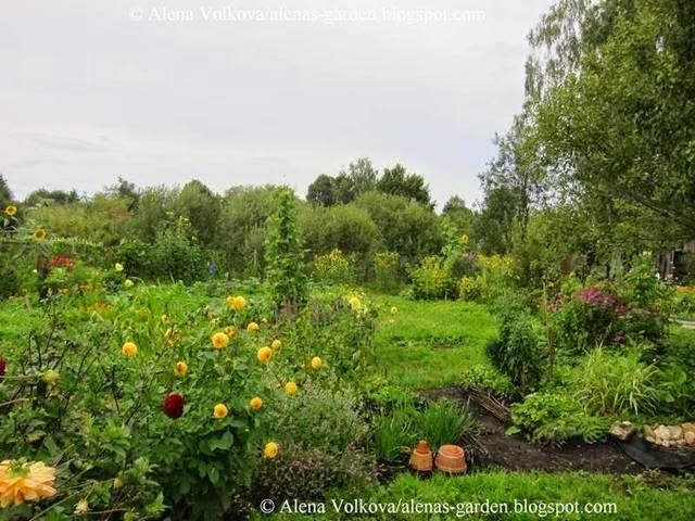 аленин сад, часть3, до, после, участок, дача, освоение участка, целина, сад, огород, георгины, флоксы