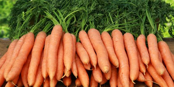 Dr. Vikram .R. Lotwala: Health Benefits of Carrots