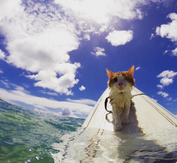 one-eyed surfing cat