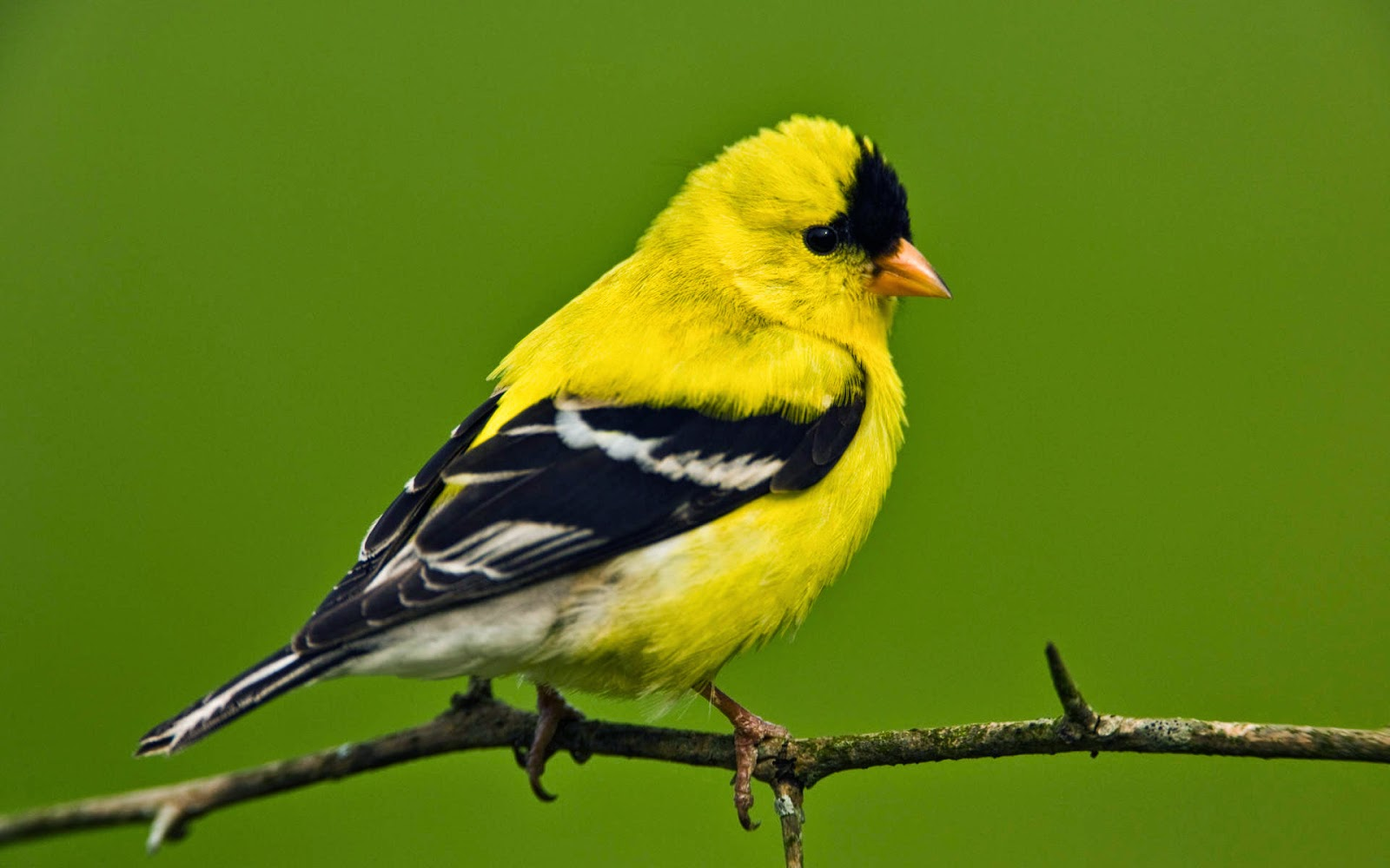 Island life in a monastery the goldfinch savior bird biocorpaavc