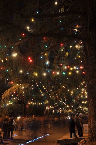 Christmas Tree Lane by Lady by Choice
