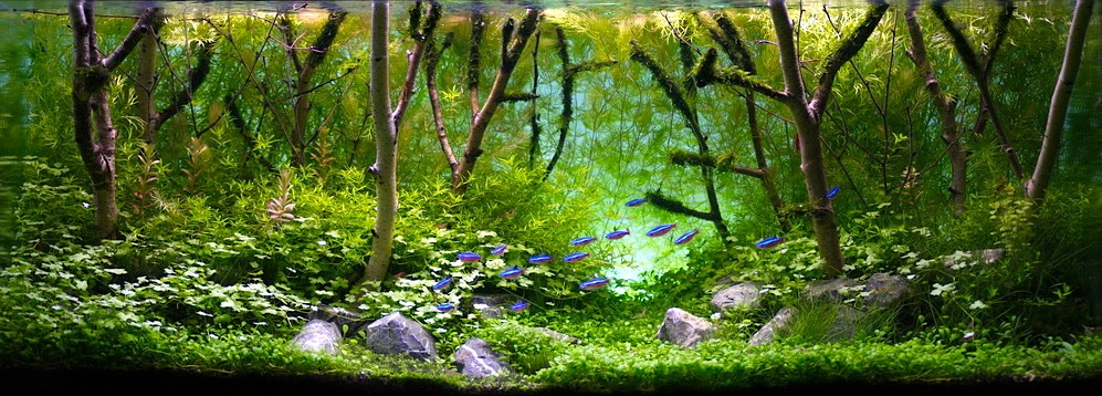 "Wijnands' WeBlog: stunning aquascape ""birch forest"""