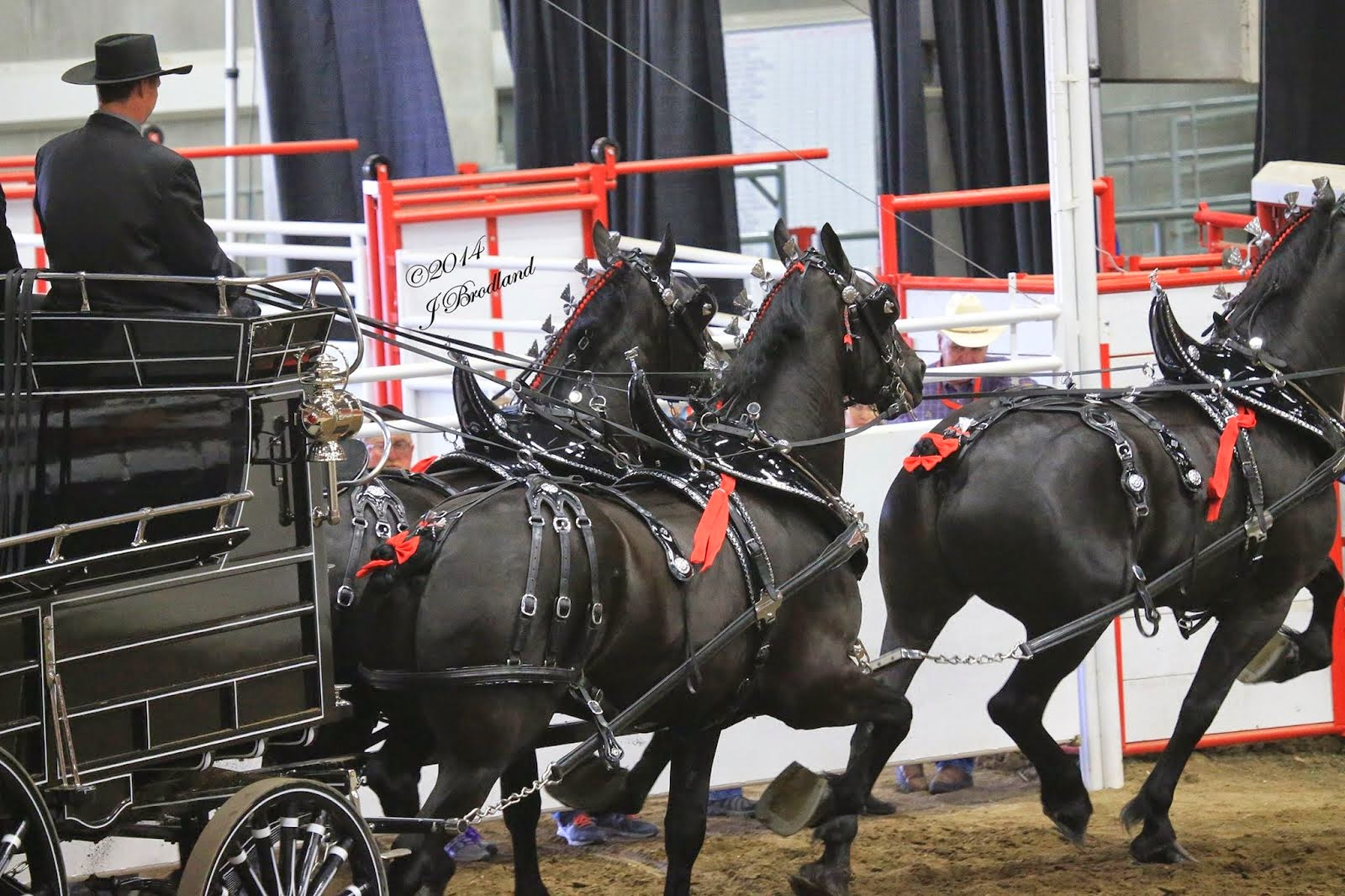 Calgary Stampede 2014  - Equine Chronicle