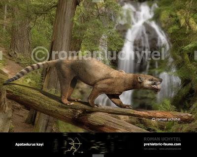 Creodonta Apataelurus