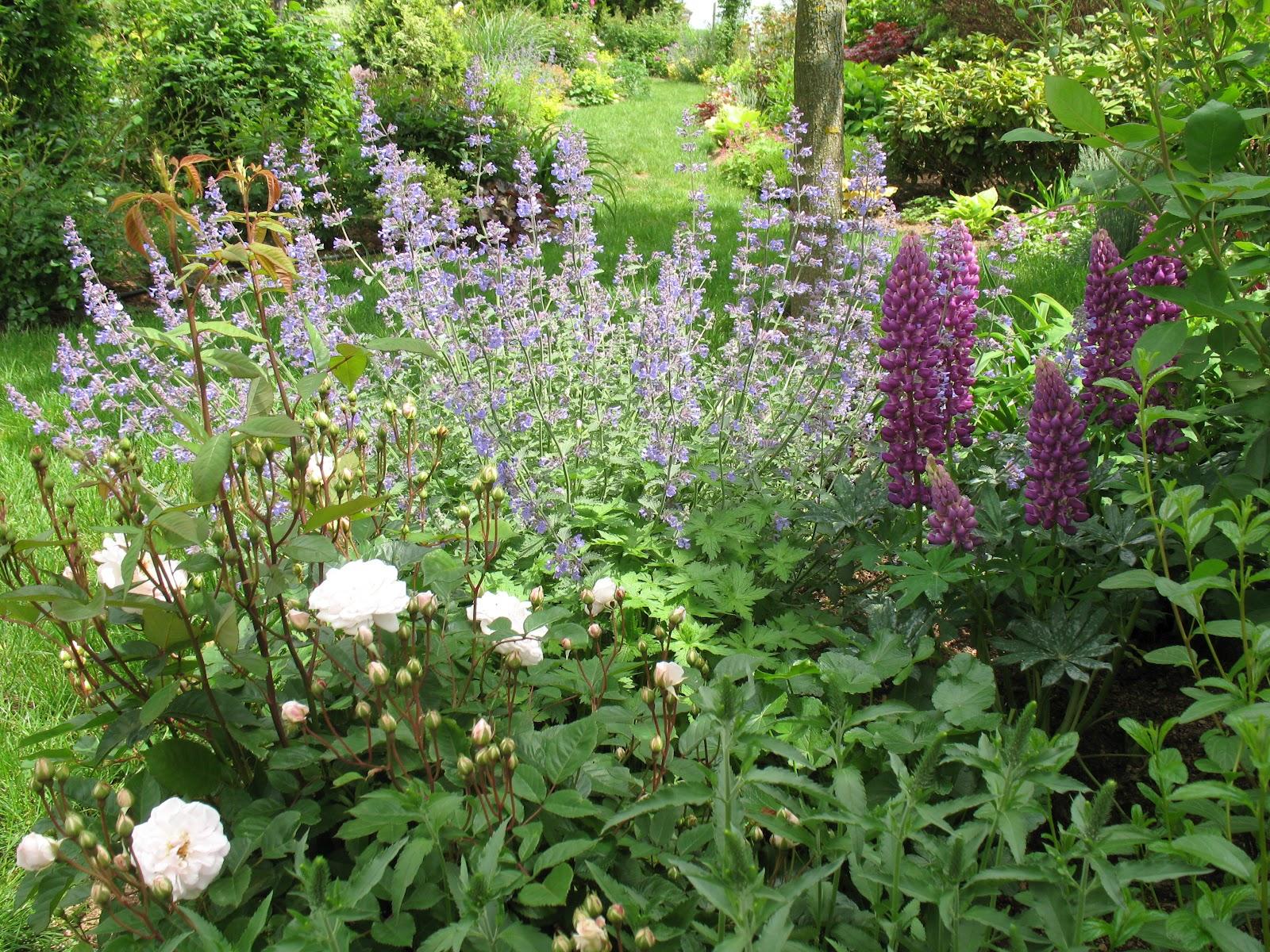 Roses du jardin ch neland n p ta walker 39 s low - Jardin de chen ...