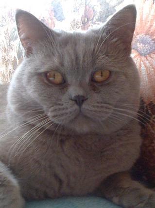 Взрослый котенок