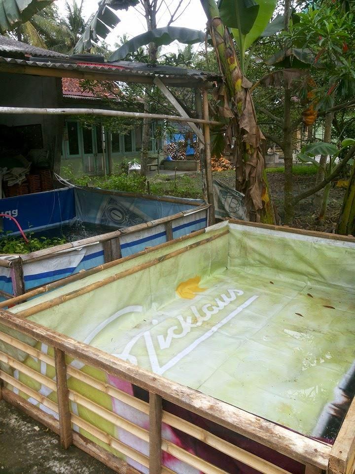 kolam terpal baliho sidat