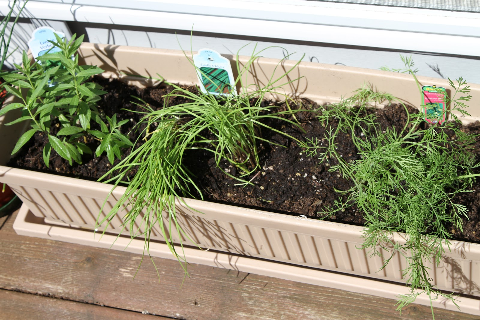 Herb Container Garden Container Marionberry and Planting out Cherry Tomatoes