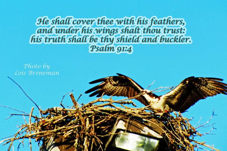 Osprey - Psalm 91:4