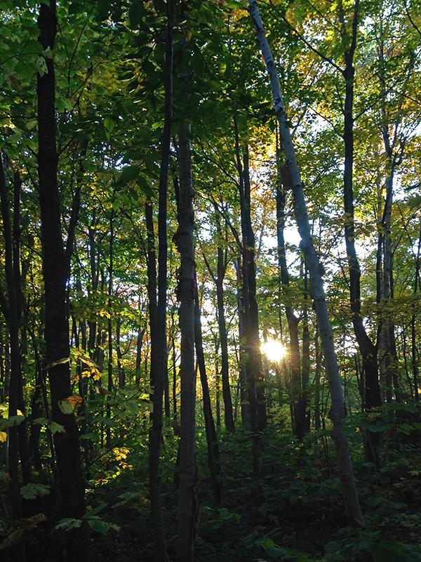 La forêt laissant entrevoir le soleil.