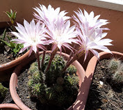 Pogledajte moje cvijeće - Date un'occhiata ai miei fiori!