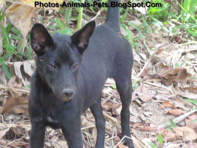 http://1.bp.blogspot.com/-q-mAzb2xWR4/ThiMkioAxxI/AAAAAAAABnY/HYX261djkmw/s1600/Black%2Bdog%2Bpictures_0001.jpg