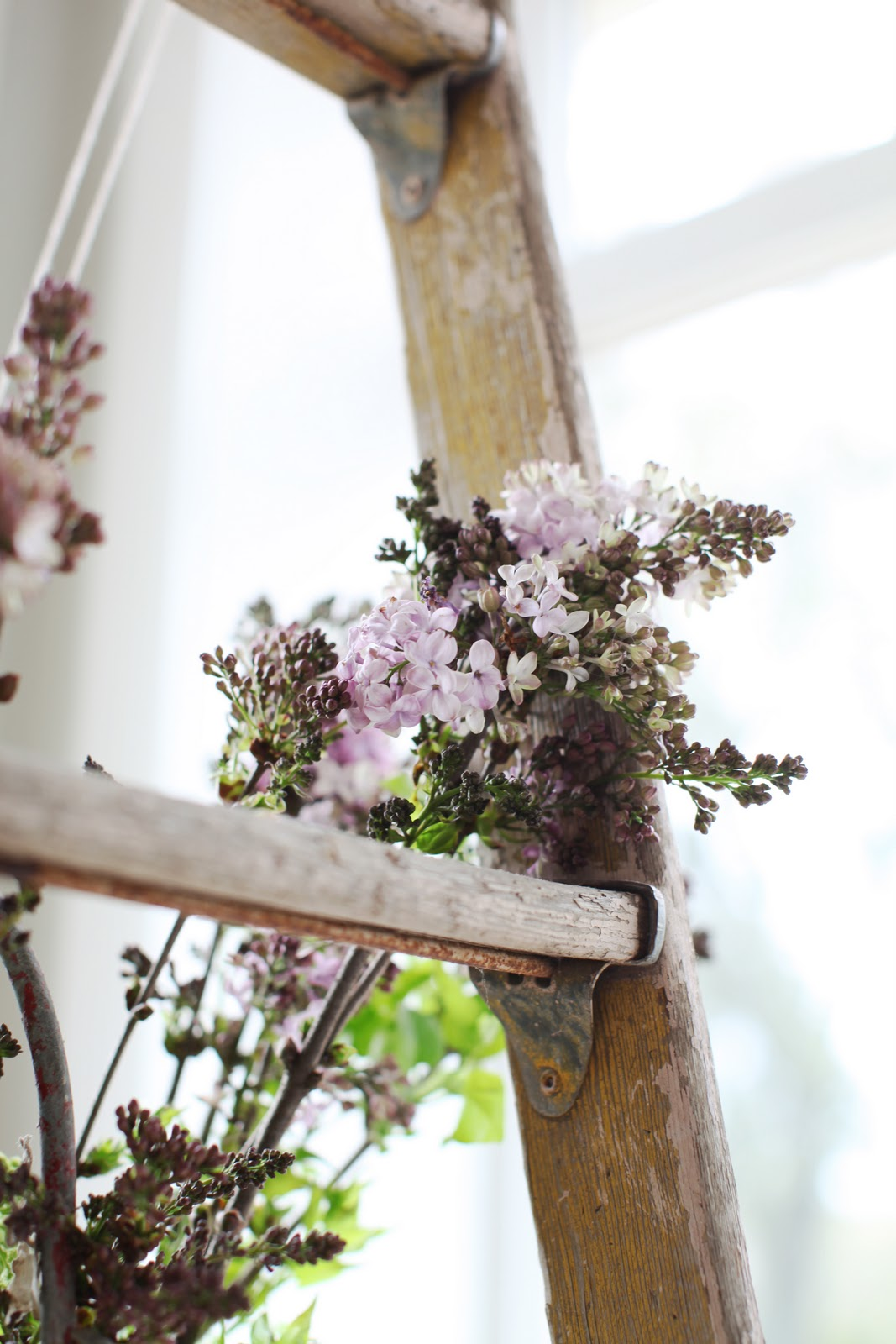Now Lilacs Are Blooming In March >> Dreamy Whites Lilacs And A French Fireman S Bucket