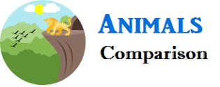animals comparison