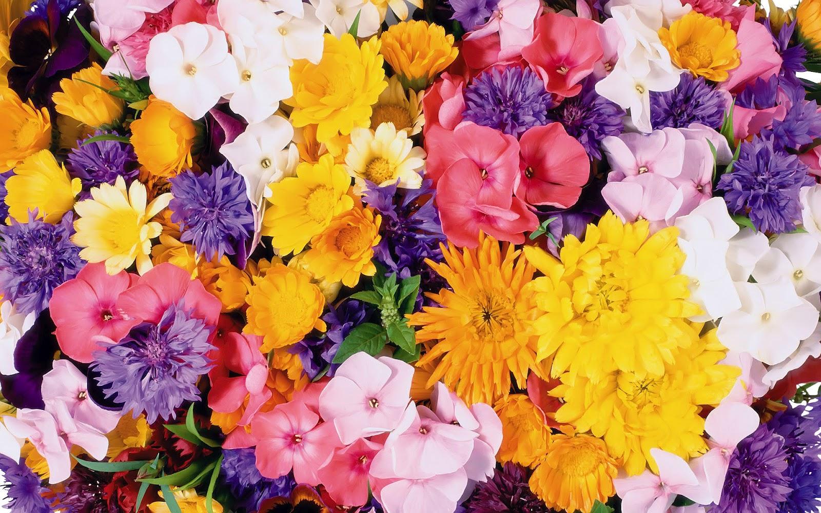 Flowers Wallpapers Flower Wallpaper ~ Top Best HD ...