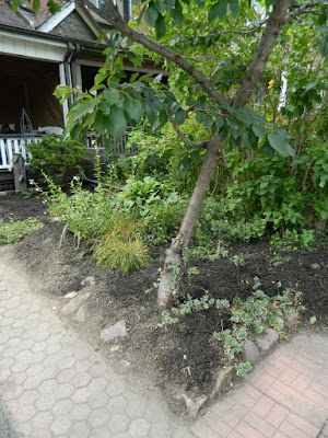 Riverdale front garden clean up after Paul Jung Gardening Services Toronto