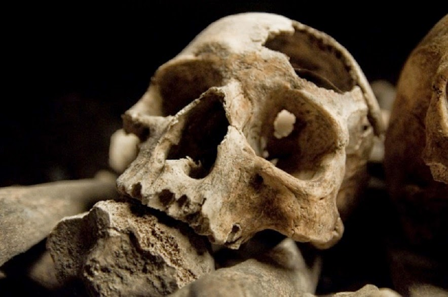 Prehistoric conflict hastened human brain's capacity for collaboration