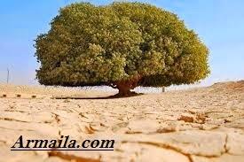 Cerita Motivasi Dua Pengembara dan Pohon Tidak Berbuah | Armaila.com