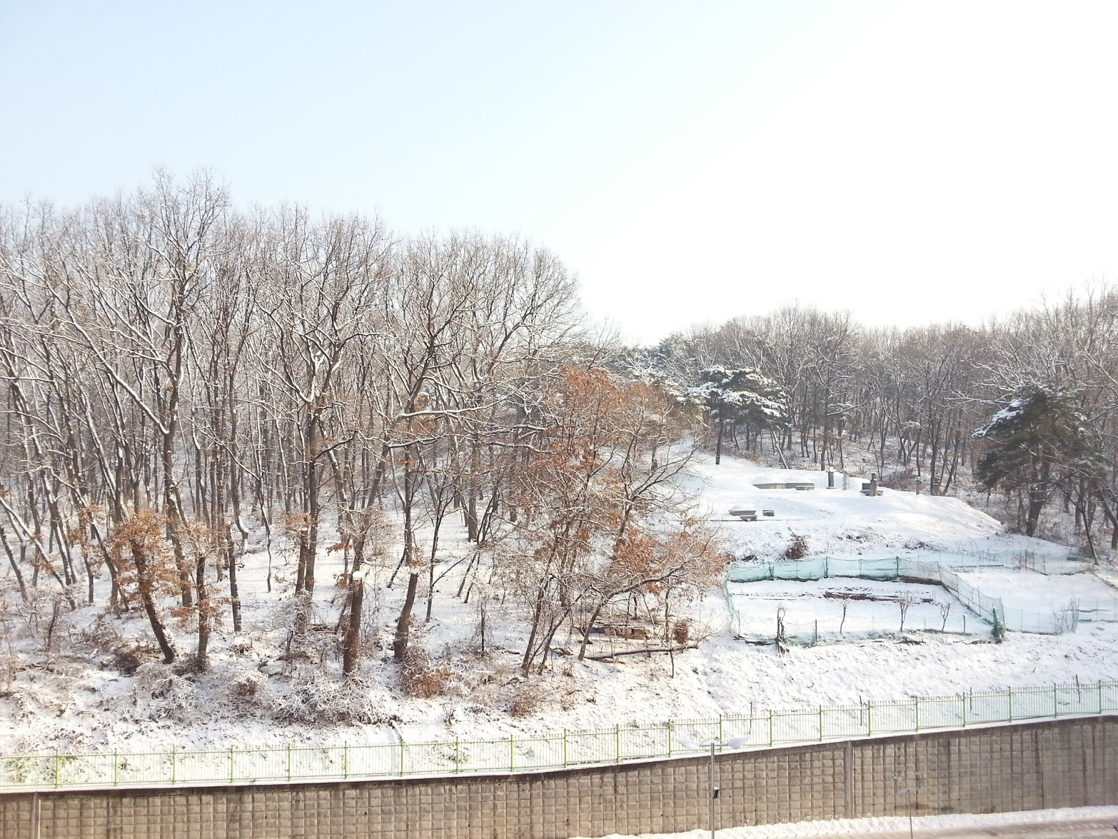 Snow day in Korea