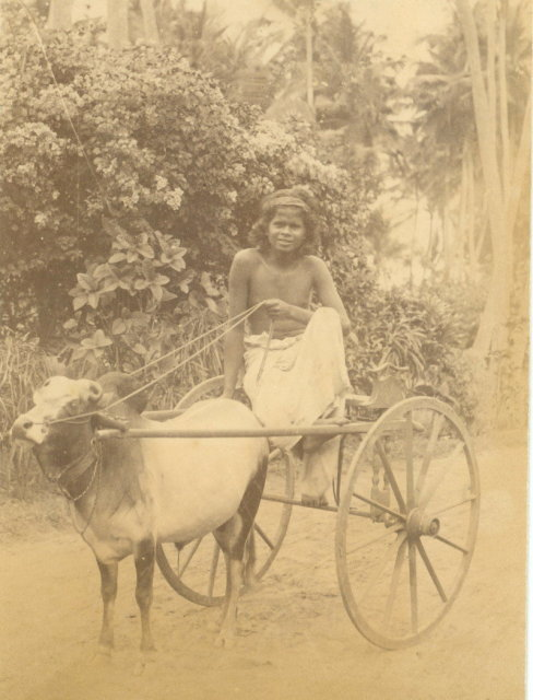 Small Ox Cart - Colombo Ceylon (Sri Lanka) c1880