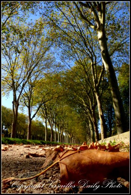 Autumn Versailles