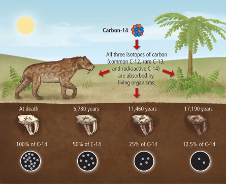explain carbon dating Radiocarbon dating involves determining the age of an ancient fossil or specimen by measuring its carbon-14 content carbon-14, or radiocarbon, is a naturally occurring radioactive isotope that forms when cosmic rays in the upper atmosphere strike nitrogen molecules, which then oxidize to become carbon dioxide.