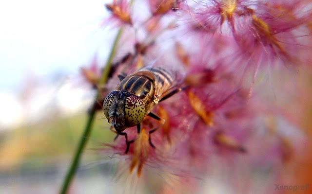 Parking Bee
