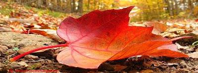 Couverture facebook feuilles