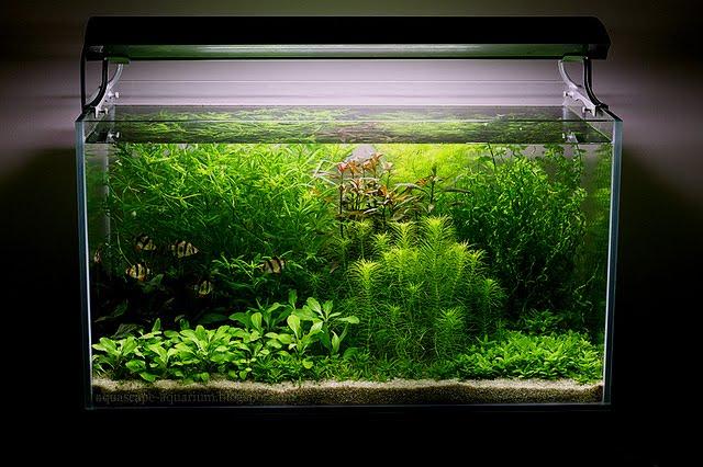 Dutch Planted Aquarium Aquascape Layout Designs