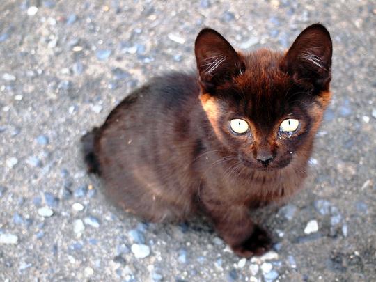 stray kitten japan