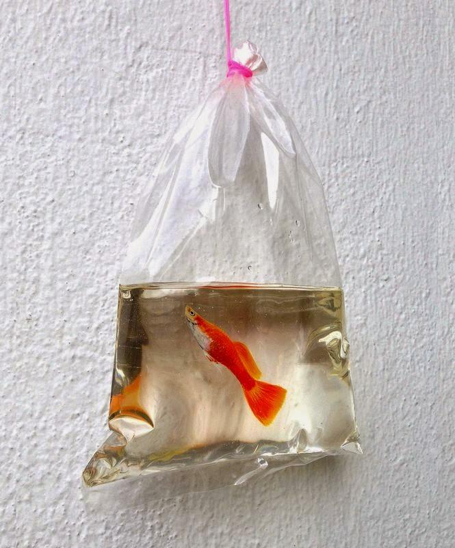 Pintura 3D: Peixe