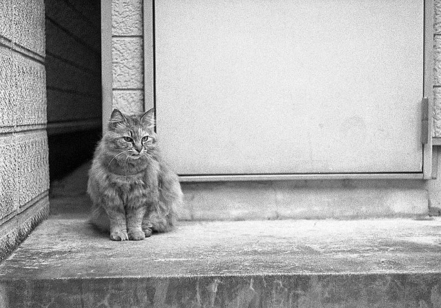 玄関猫の画像