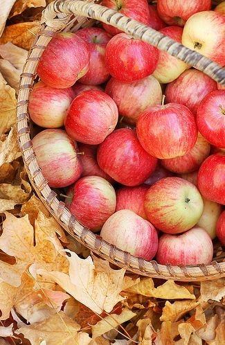 mele-autunno