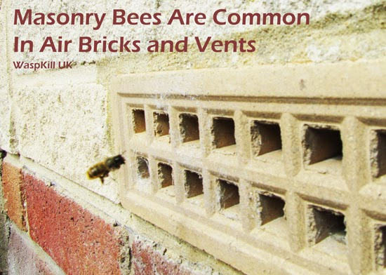 masonry bees walls