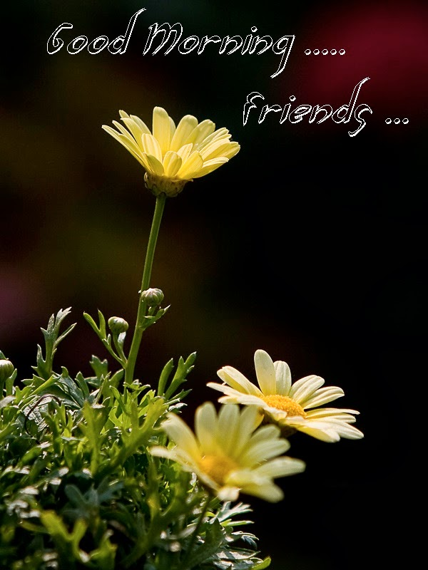 Khushi For Life Good Morning Yellow Flowers Wishes Images Pics