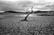 efectos de la pérdida de la biodiversidad es la deforestación o desertización del suelo.
