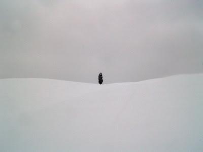 Cipresso sotto la neve