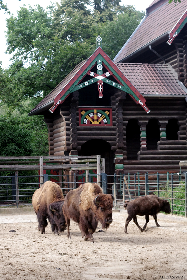 aliciasivert, alicia sivertsson, alicia sivert, berlin zoo, djurpark, djurhållning, instängda djur, djur i bur, cages, animal, animals, cage, bisonoxe, bison