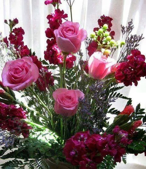 a beautiful rose image wallpaper