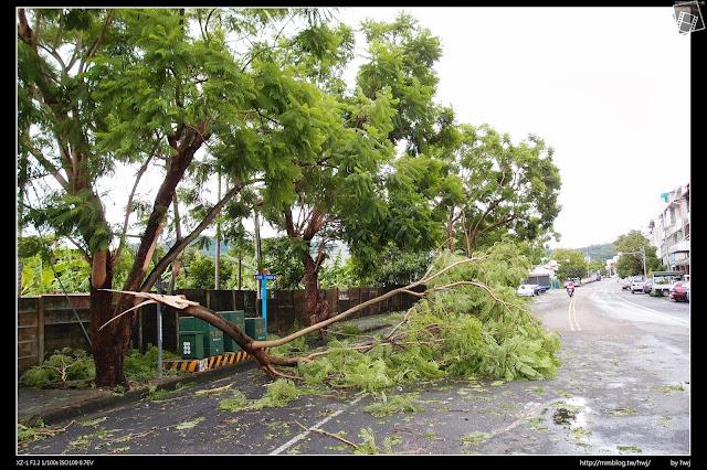 2013-07-13 蘇利颱風侵襲南投 中興的藍花楹還好不是整顆倒掉