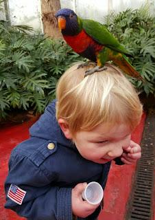 ondeugendespruit avifauna
